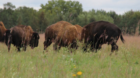 About the National Grazing Lands Coalition